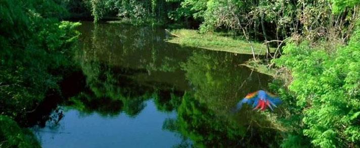 在亞馬遜森林中的湖水好清好安靜好愜意