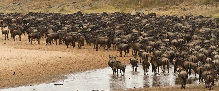 肯尼亚动物大迁徙8日之旅