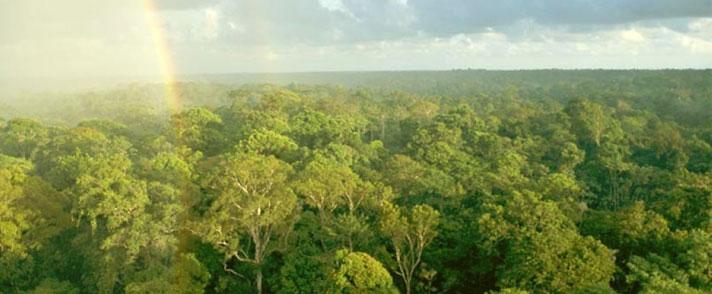 一條美麗的彩虹在亞馬遜原始森林的上空
