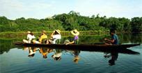 奢华狂野巴西亚马逊热带森林生