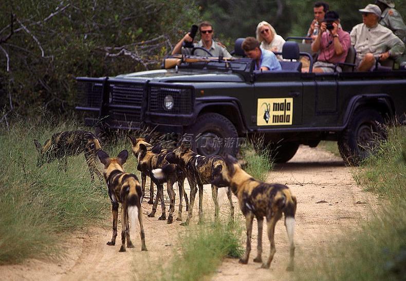 奢華南非狩獵之旅--回歸真男人 去南非做個狩獵英雄10天 (2人成團)¥228400元/人