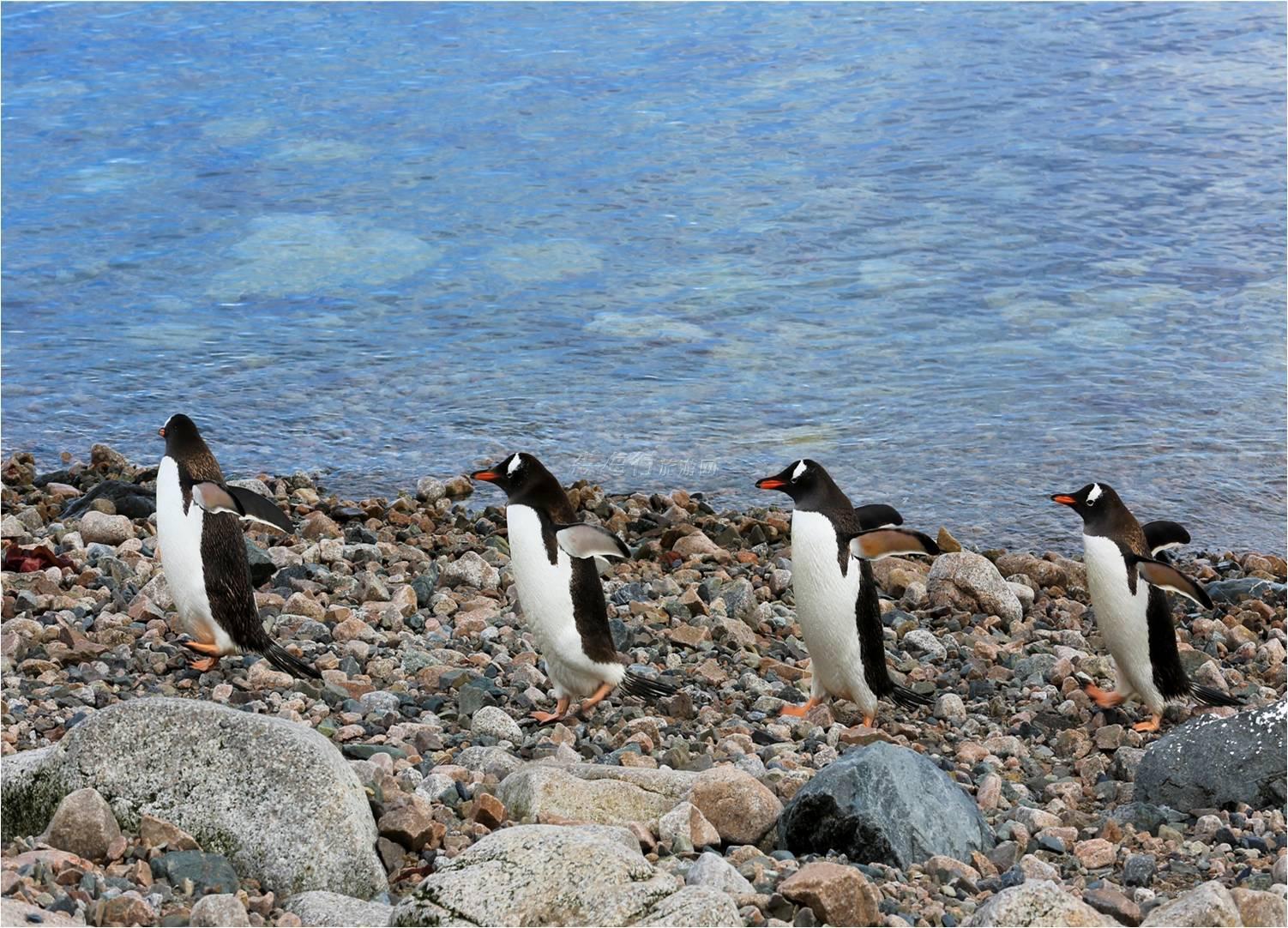 世界盡頭與您相約·阿根廷南極16天唯美之旅(2人成團)86000元/人起
